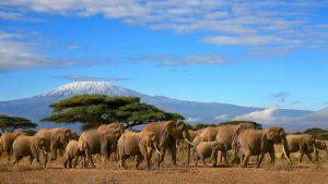 Африканское сафари, белоснежные пляжи и уникальная природа - все это Танзания