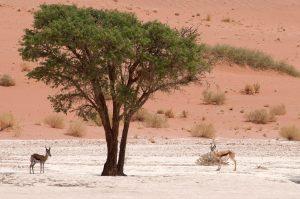 Африканская экзотика Намибии